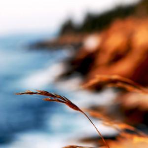 AcadiaNtlPark_11_lr